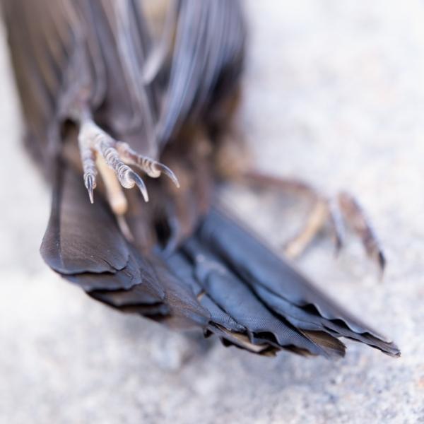 108 död fågel
