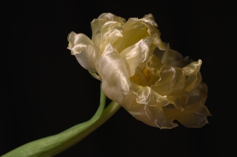 12. Flower Friday