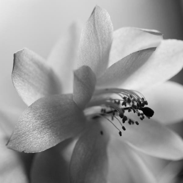 132 Orkideer-2