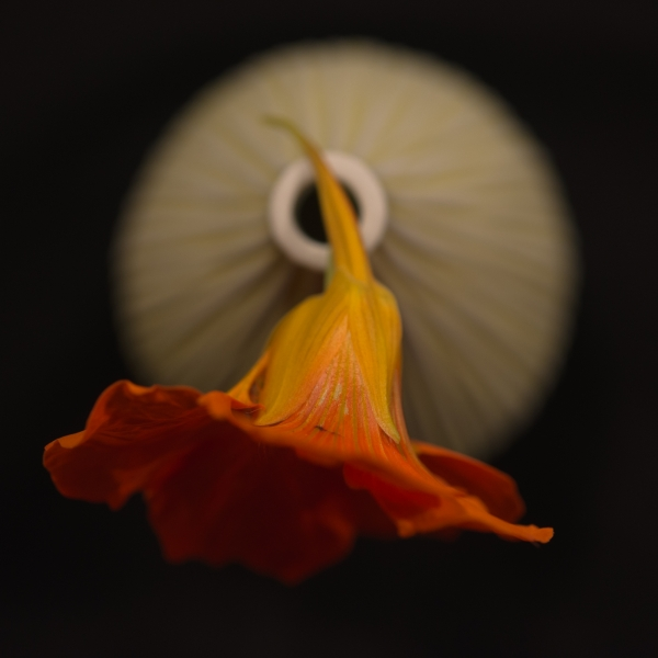 184 Blomma