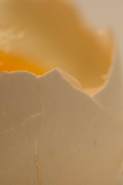 216 Egg
