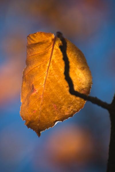 236 Leaf