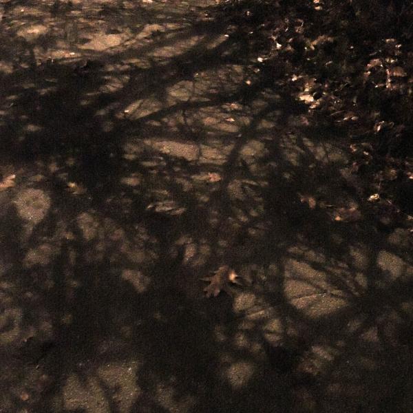 241 Skuggor och löv