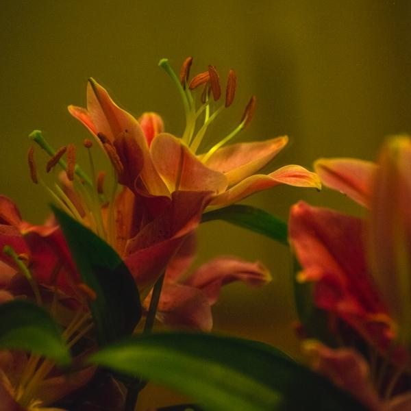 250 Blomma