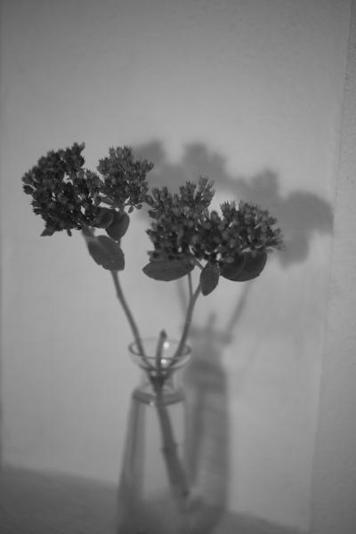 257 Blomma