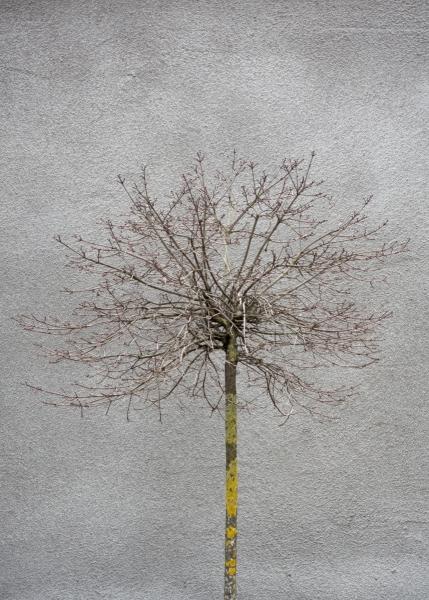 28 The tree