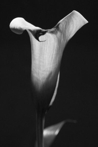 345 Flower