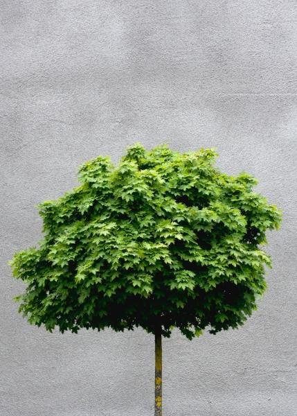 80 the tree