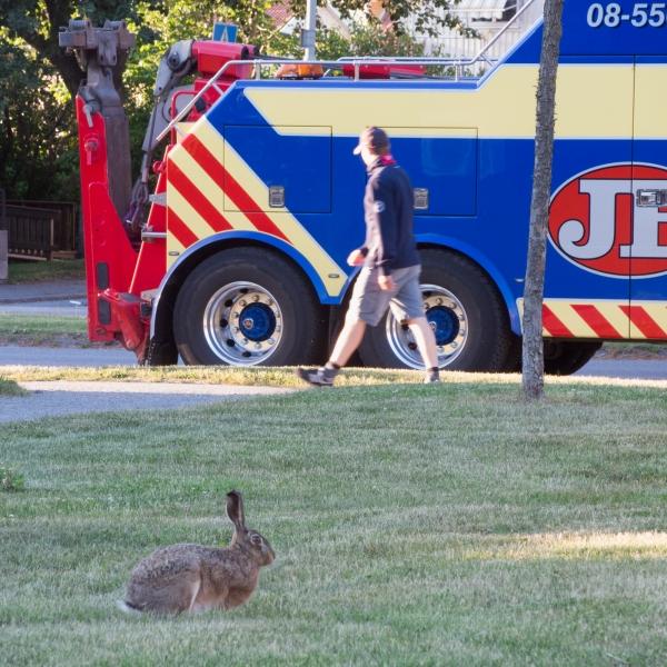 99 Hare