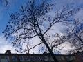 17. Blue sky