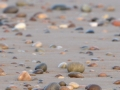 23 pebbles