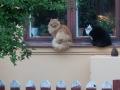 72 Katter