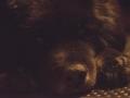 9. The dog